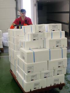Livraison des achats de poisson aux Viviers d'Audierne